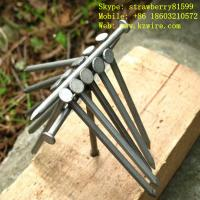 Buy cheap Wood Common Wire Nails, Polished Or Galvanized Surface product