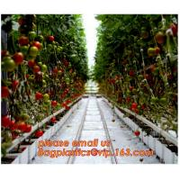 Buy cheap Film Covering Tomato Planting Greenhouse,Tomato Greenhouse film, Plastic Polyethylene sheet 6 mil 4 year UV Resistant cr from wholesalers