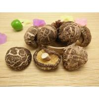 Buy cheap Factory Price Premium Thick  Dried Tea Flower Mushroom Shiitake Whole 4-6CM from wholesalers
