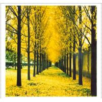 Buy cheap Poster Photo Art Print2 from wholesalers