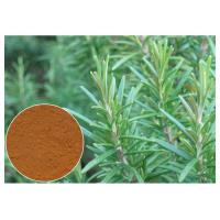 Buy cheap Cosmetic Rosemary Antioxidant Extract , Rosemary Extract Powder CAS 20283 95 5 from wholesalers