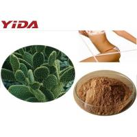Buy cheap Weight Loss Ingredient Hoodia Gordonii extract 20:1weight loss slimming  Hoodia gordonii extract Yellow Brown Powder from wholesalers