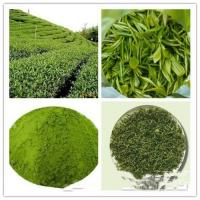 Buy cheap Green Tea(Powder&Extract); Matcha powder; Freeze- Dried; prevent diabetes;antioxidant factors & anti-aging from wholesalers