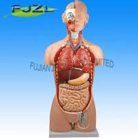 Buy cheap Torso sexless - 18 parts product
