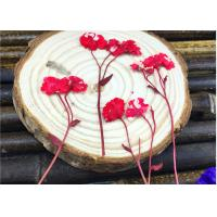 Red Daisy Material DIY Pressed Flowers Dried Specimen For Epoxy Cell Phone Case