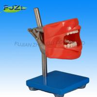 Buy cheap Simple Dental Phantom 3 Head Fit for Nissin Typodont from wholesalers