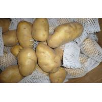 Buy cheap 150g Organic Fresh Holland Potato No Pollution , No Insect For Market, large size, good shape, Neat uniform from wholesalers