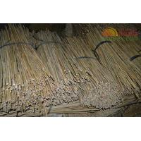 Buy cheap Kinton Bamboo from wholesalers