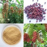 Buy cheap Natural Gymnema leaves Extract, Pure Gymnemic acid 75% from wholesalers