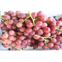 Buy cheap Juicy Green / Red Globe Grapes Seeded With Sweet Flesh , 18 - 28mm, Easy peeling, Firm and crisp flesh from wholesalers