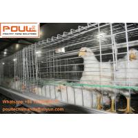 Buy cheap Poultry Farming Steel Sheet Silver Automatic Broiler Chicken Cage  with Feeding&Drinking System from wholesalers