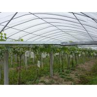 Buy cheap Floating Row Frost Protection Cover, Agriculture Greenhouse PP Spunbond Non Woven Fabric from wholesalers