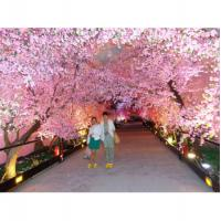 Buy cheap Artificial Pink Cherry Trees from wholesalers