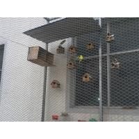 Buy cheap Enclosures Webnet/stainless steel knotted cable nets for zoo enclosure from wholesalers