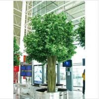 Buy cheap Ficus Silk Tree from wholesalers