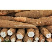 Buy cheap Automatic Cassava Flour Production Line for Sale from wholesalers