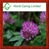 Buy cheap Red Clover Extract HPLC for women's health from wholesalers