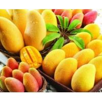 Buy cheap For beverage mango juice powder factory price/pure african mango powder sample free from wholesalers