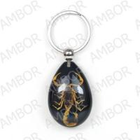 Buy cheap Promotional Gift----Real Scorpion Resin Key Chain from wholesalers