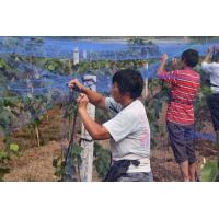 Buy cheap Anti bird netting protect grape plants, HDPE100% from wholesalers