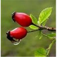 Buy cheap Rose hip Extract from wholesalers