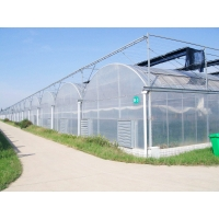 Buy cheap Polycarbonate L10m L12m Agricultural Greenhouses Plastic Tomato Greenhouse from wholesalers