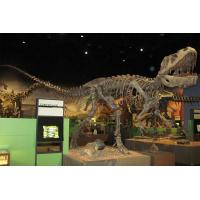 Buy cheap Golden Plated Complete Dinosaur Fossil Dino Skeleton For Amusement Park from wholesalers