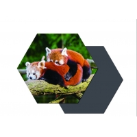 Buy cheap Hot Sell Manufacture High Quality Customized Promotional 3d lenticular printing fridge magnet from wholesalers