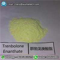 Buy cheap Tren E Trenbolone Enanthate POWDER CAS 472-61-5 for Cutting and Lean Muscle Growth from wholesalers