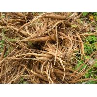 Buy cheap Japanese Thistle Herb Cirsium japonicum Fisch ex DC whole part Japanese Thistle Herb or Root organic herb da ji from wholesalers