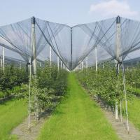 Buy cheap Anti-Hail Net for Trees product