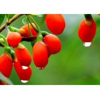 Buy cheap Pure Natural 10%-70% polysaccharides Goji Berry Extract--Lycium barbarum L. from wholesalers