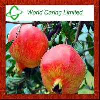 Buy cheap High Quality Pomegranate hull extract punicalagin for cosmetics from wholesalers