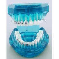 Buy cheap Dental Correction Model Bracket Contrast Model Metal Brackets Ceramic Brackets product