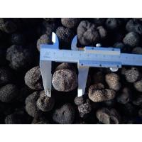 Buy cheap Factory Price Premium Grade Chinese Fresh Truffle 1-3CM/3-5CM/5CM above from wholesalers
