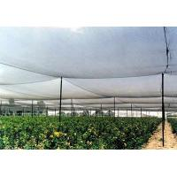 Buy cheap High Strength Anti Hail Agriculture Net , Hdpe Raschel Knitted Netting from wholesalers