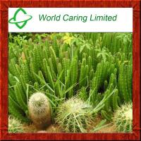 Buy cheap Weight Loss Ingredient Hoodia Gordonii extract 20:1 Cactus Extract product
