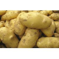 Buy cheap Pure Natural Fresh Holland Potato Yellow Flesh , Thin Skin For Human Health from wholesalers