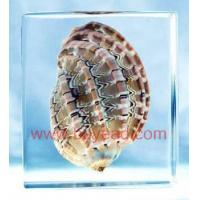Buy cheap China seashell amber resin crafts,office gifts,business gifts,Corporate Gifts from wholesalers