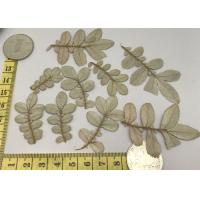 White Leaves Ornament Real Pressed Flowers For Home Art Painting / Teaching