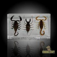 Buy cheap Popular in EUR Educational Specimen/Scorpion Set from wholesalers