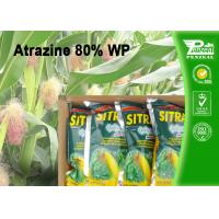 Buy cheap Commercial Weed Killer Selective Broadleaf Herbicide Cas 1912-24-9 Atrazine 80% WP from wholesalers