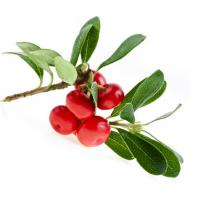 Buy cheap Bearberry Extract Alpha-Arbutin 98% powder from wholesalers