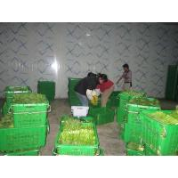 Industrial Cold Room Containers , Refrigerated Sea Containers Explosion Proof