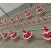 Buy cheap Poultry Farm Shed Ground Broiler Poultry Equipment from wholesalers