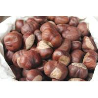 Buy cheap manufacturer supply Horse Chestnut Extract, Aescin 20% 40% 98%, CAS No.: 6805-41-0, Aesculus hippocastanum Extract from wholesalers