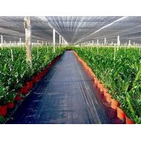 China Weed killer Agriculture Non Woven Fabric Plant / Ground Cover Breathable Anti Frost on sale