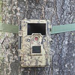 Buy cheap Hunting Digital Wildlife Camera , Infrared Hunting Camera That Camera Trap from wholesalers