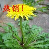 Buy cheap Factory High Quality Low Price Hot Selling Dandelion Extract/Dandelion Root Extract Powder from wholesalers