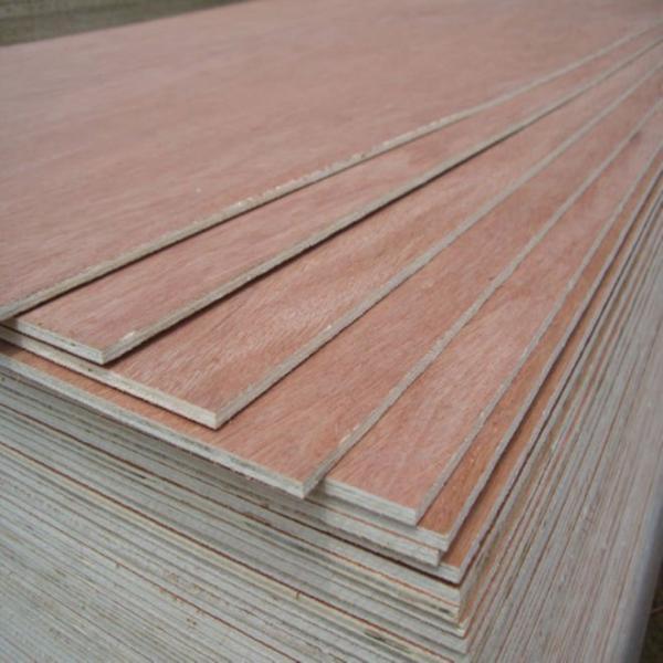 Mm bintangor plywood